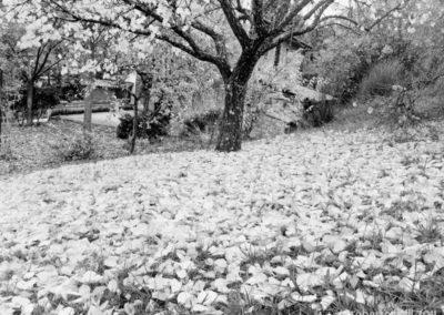 06112011-prima neve